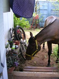 petite incartade dans le jardin!