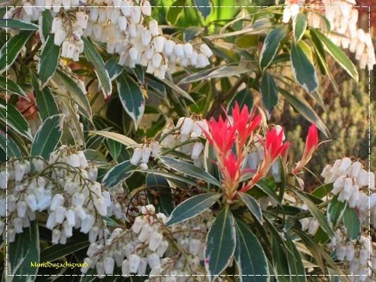 Fleurs-printemps-2011 0814