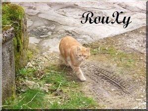 RouXy-de-Frimousse.jpg