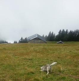 Du 16 au 30 août 2014....découverte de la montagne