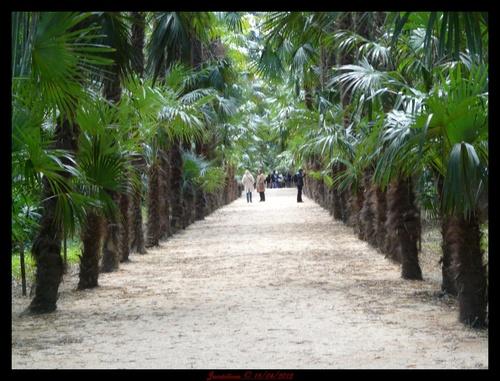 la bambouseraie suite et fin