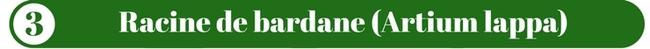 Racine de bardane (Artium lappa)