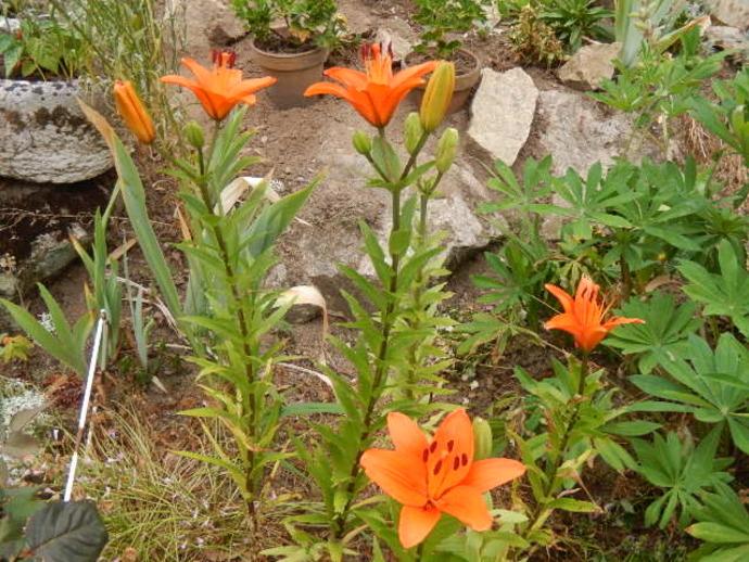 Vent,ciel gris et pluie, l'influence sur le moral et sur nos plantes