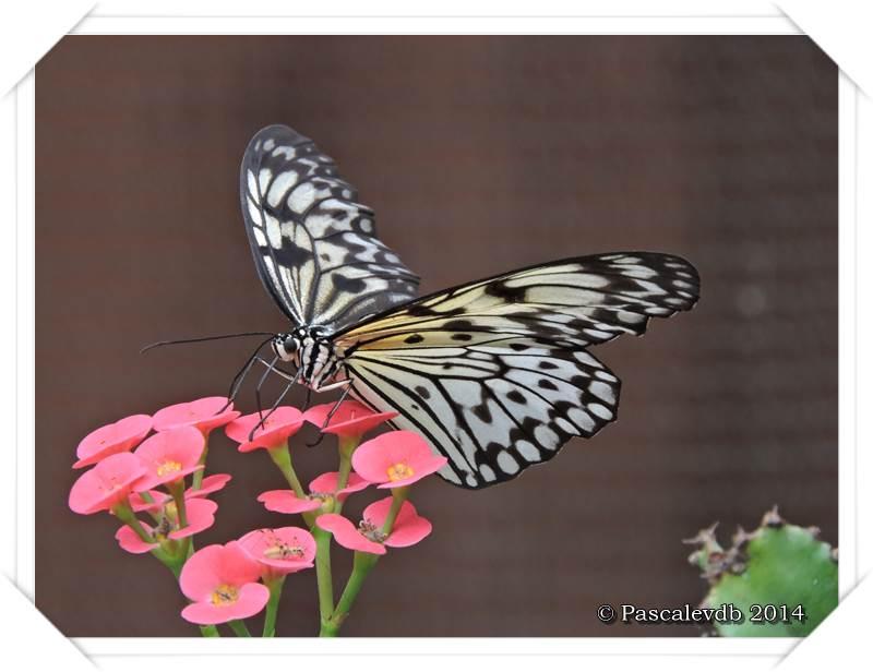 Le Paradis du Papillon à Sanguinet - 8/10