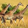 2-395-animals_008-313000