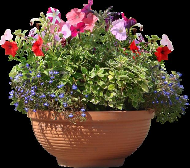 Fleurs en Pots