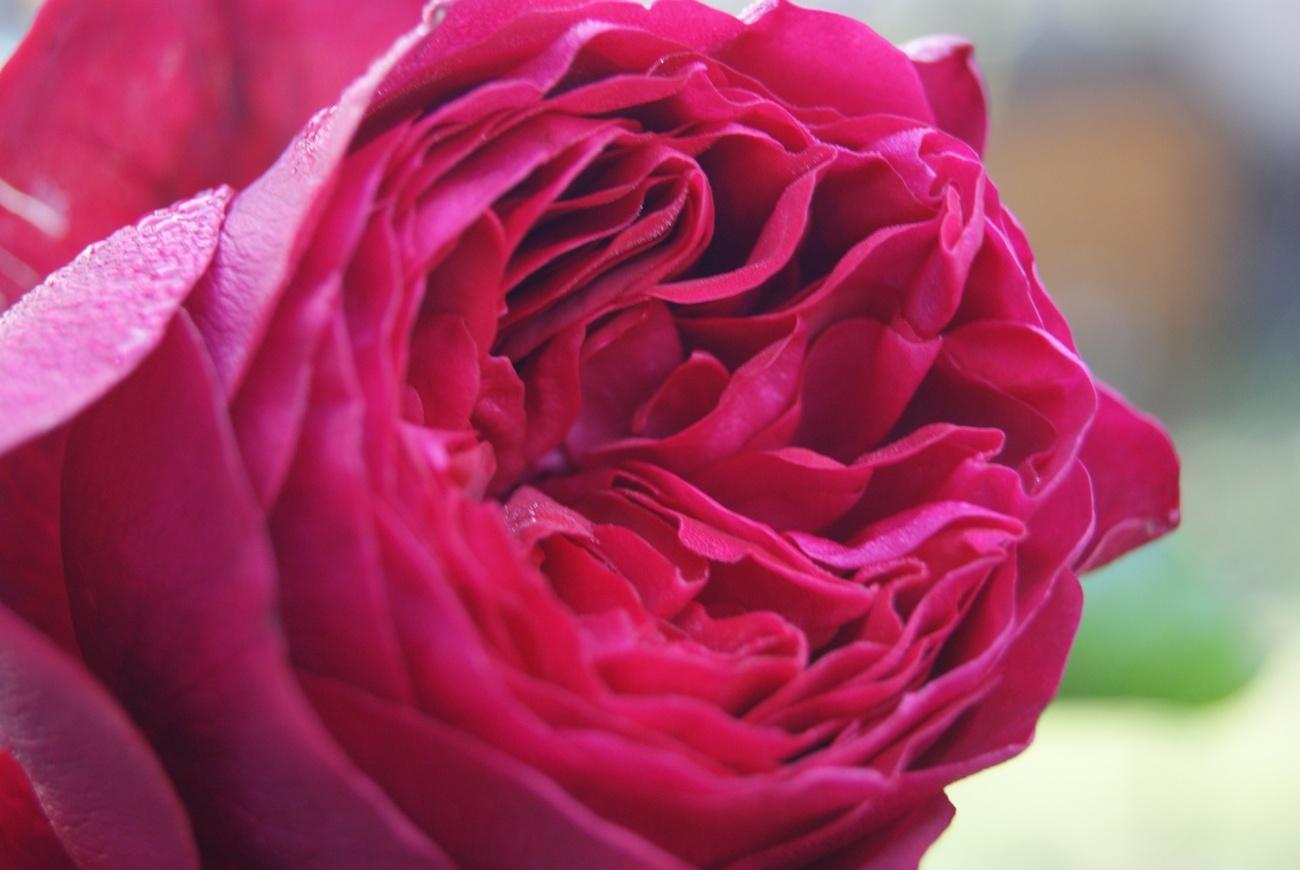 Rosée automnale.