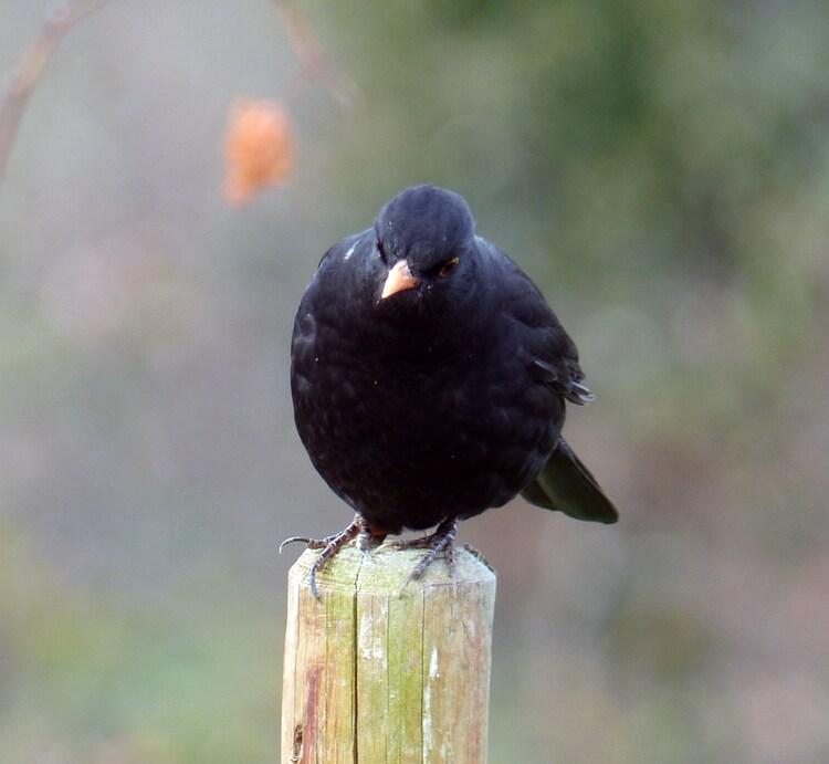 Plus petit est l'oiseau, plus il ouvre son bec.