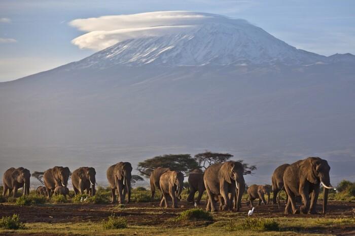 Flamants Roses Dans Le Cratère Du Ngorongoro En Tanzanie.