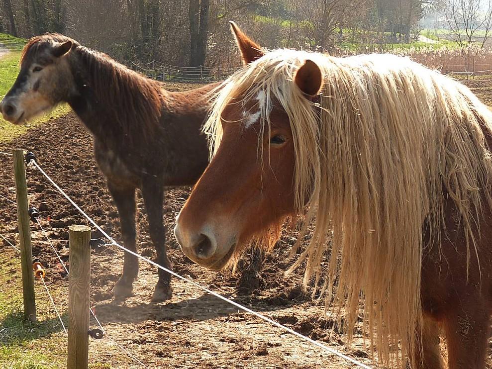 Une-blonde-chevaline.jpg
