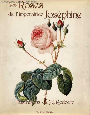 Résultat d'images pour rose imperatrice josephine