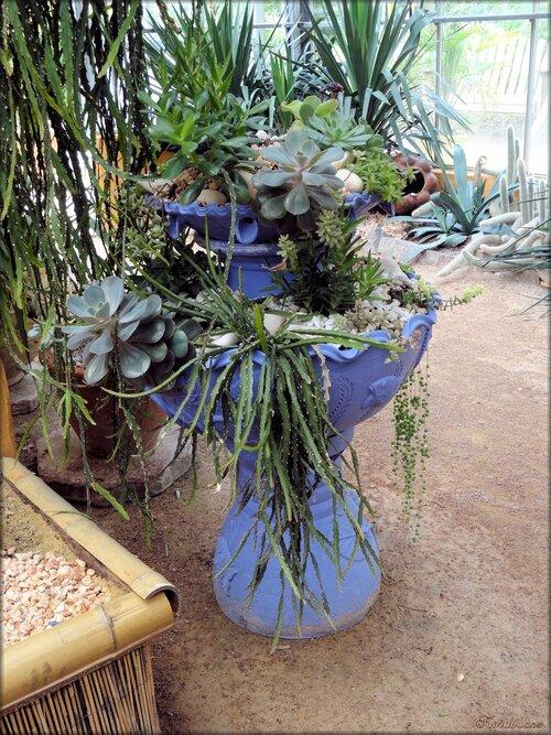 Photo de la serre de cactées (Parc floral Court d'Aron)