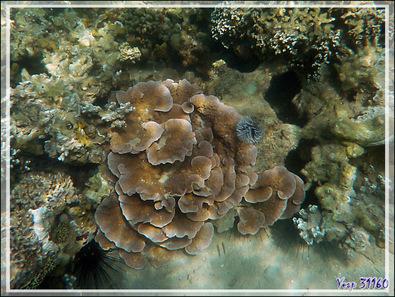 Quelques images de snorkeling à Nosy Sakatia - Madagascar