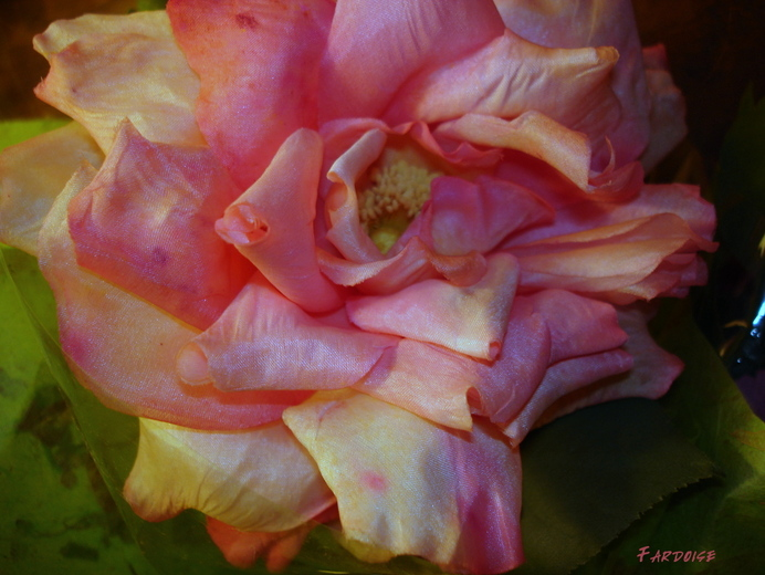 Photographier : la rose de soie