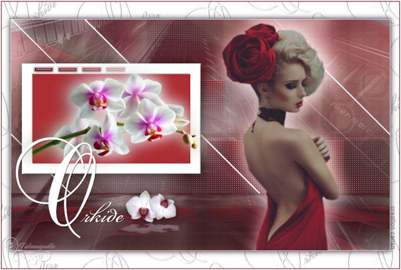 *** Orkide ***