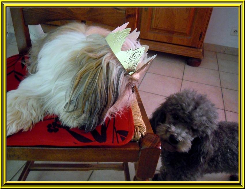 Miss Blue chez sa nounou et la galette des rois