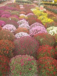 fleurs d automne 016