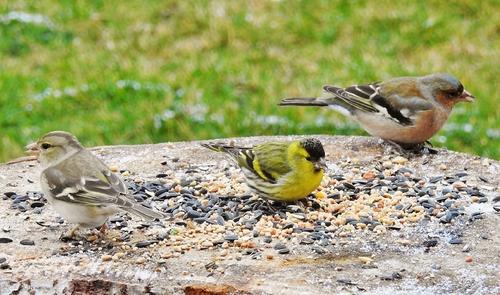 Nouvel oiseau au jardin cet après-midi