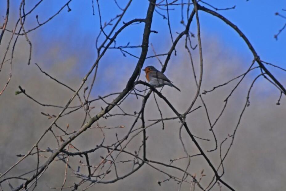 Oiseaux-2-0319_modifie-1.jpg