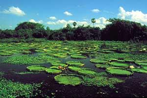 s pantanal