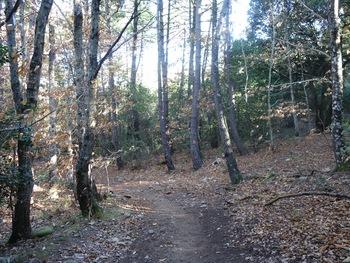 Plus haut dans la forêt. Les châtaigniers ont déjà perdu leurs feuilles !