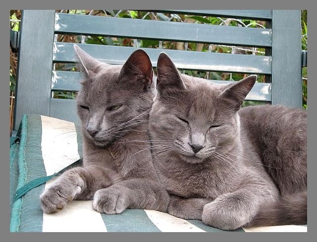 Arrivée d'un nouveau chat au sein de votre foyer : comment faire ?