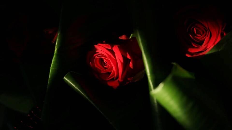 Roses cloisonnées Gières