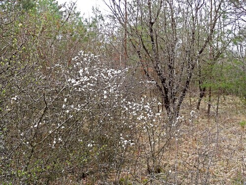 -Plantes sauvages de nos forêts