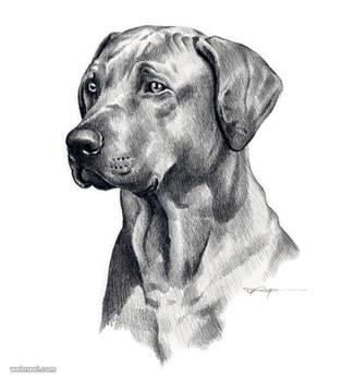 dog pencil drawing