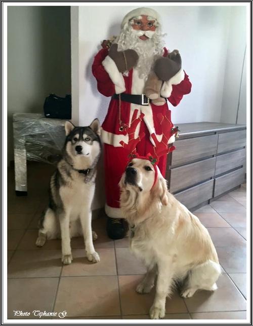 Vos Huskys fêtent Noël (25 décembre 2015)