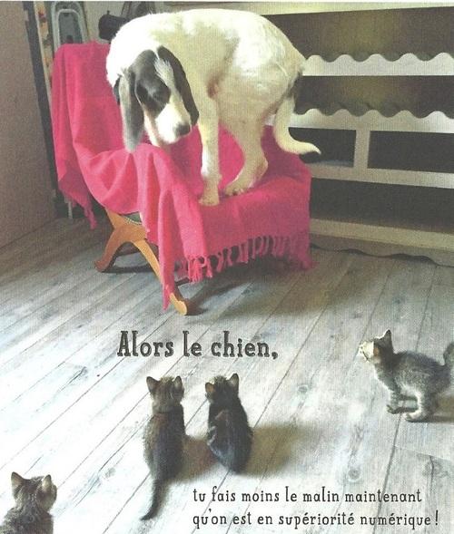 Sympas les chats? ...hum....