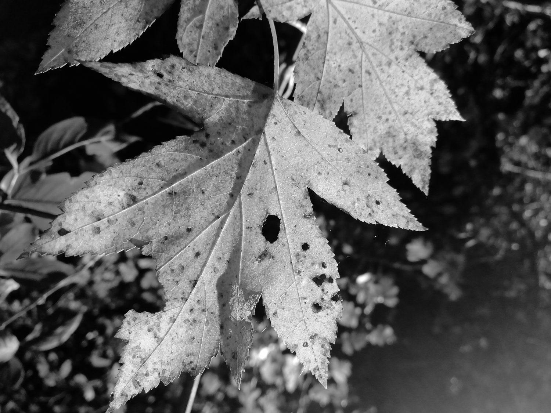 Balade en forêt en N&B avec un smartphone #181122