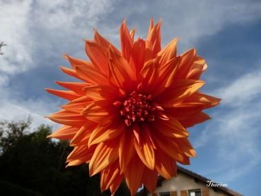 Fleurs d'automne (19)