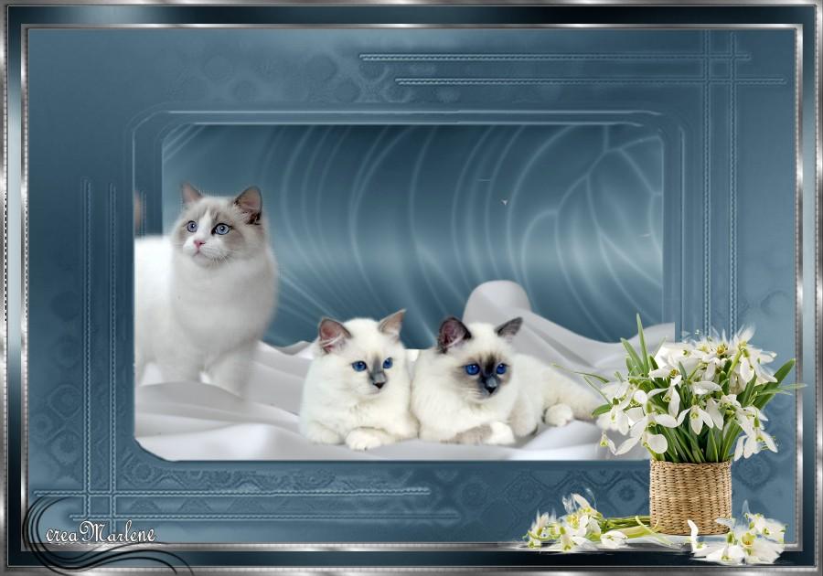 ♥ Les chats ♥