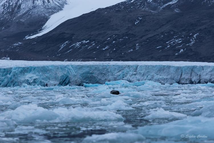 Au royaume des glaces