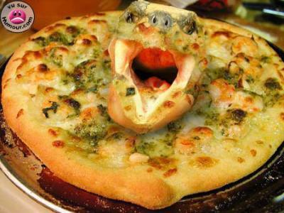 PIZZA AU CHAMPIGNONS... aux escargots, où PIZZA GASTRO vous avez le choix, accompgnez-moi