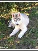Laïcko (4 mois)