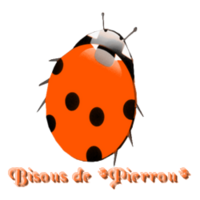 Tube coccinelle