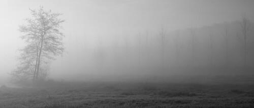 givre et brouillard ...