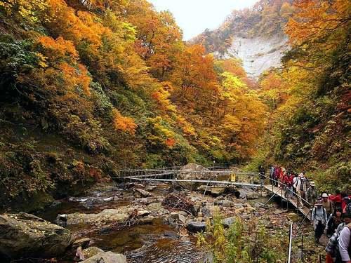 Patrimoine mondial de l'Unesco : Shirakami-Sanchi - Japon -