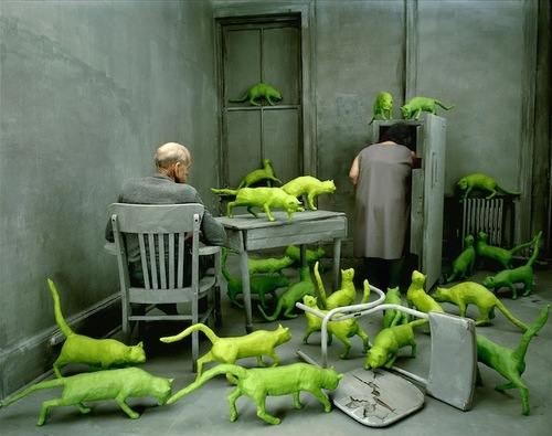 10 - Mises en scène avec chats