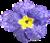 Apró virágok...