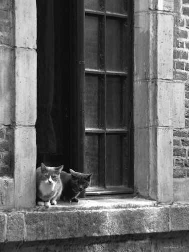O2 - Des chats à la fenêtre