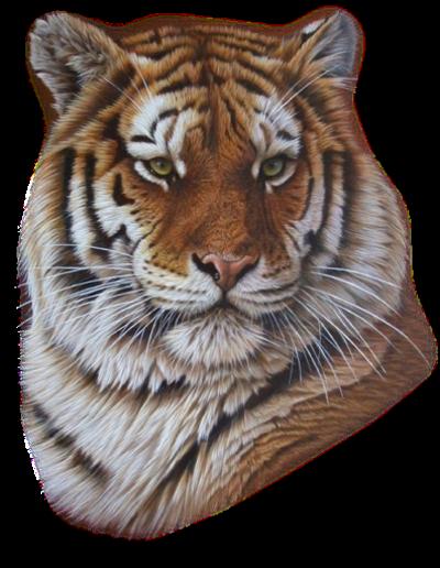 Tubes tigres en png