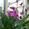 orchid 038.JPG