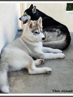 Kira (presque 3 mois) et son copain