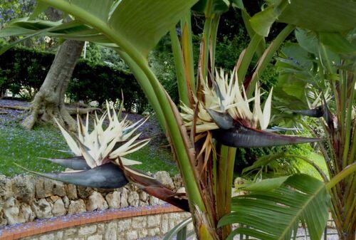 Fleurs oiseaux