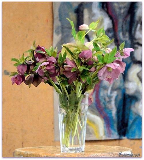 Bouquet d'hellébores