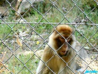 Le Vigen 87: Une petite balade dans ce beau parc paysager et animalier 1/3