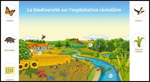 L'école des céréales: la biodiversité sur l'exploitation céréalière